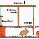 How Make Rabbit Traps ?