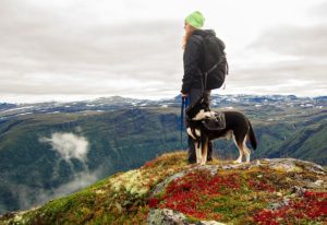 Tips for A Good Dog Hiking