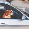 5 Ways to Survive a Solo Road Trip with Your Dog