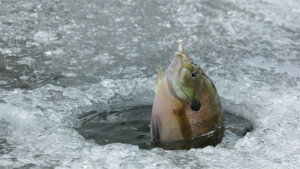 7 Ways to Catch Fish In An Emergency Placeholder