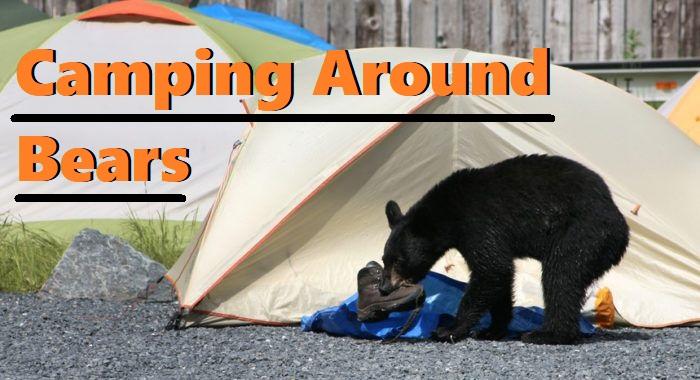 How Camping Around Bears
