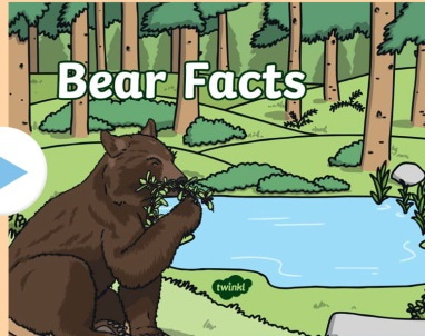 Facts About Bear