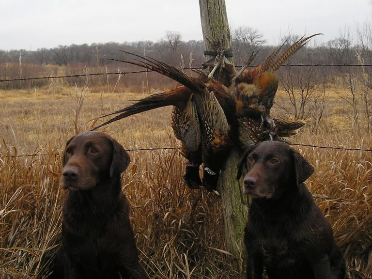5 tips to prepare your dog for hunting season