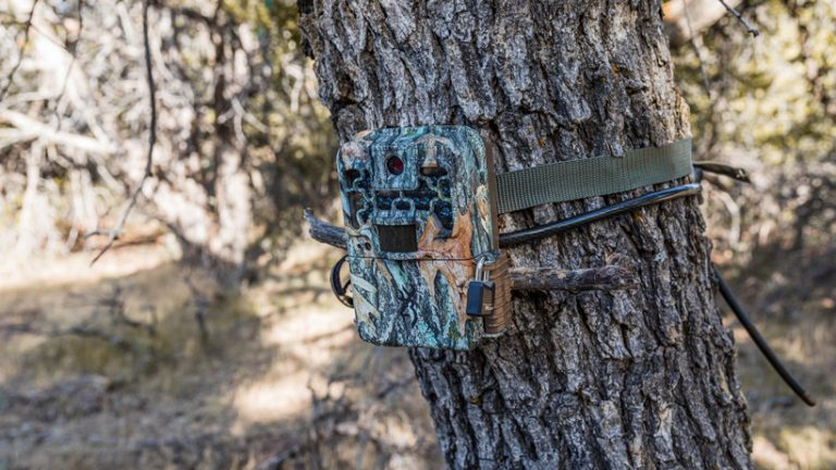 6 Best Trail Camera Reviews-Buyer Guide 2021