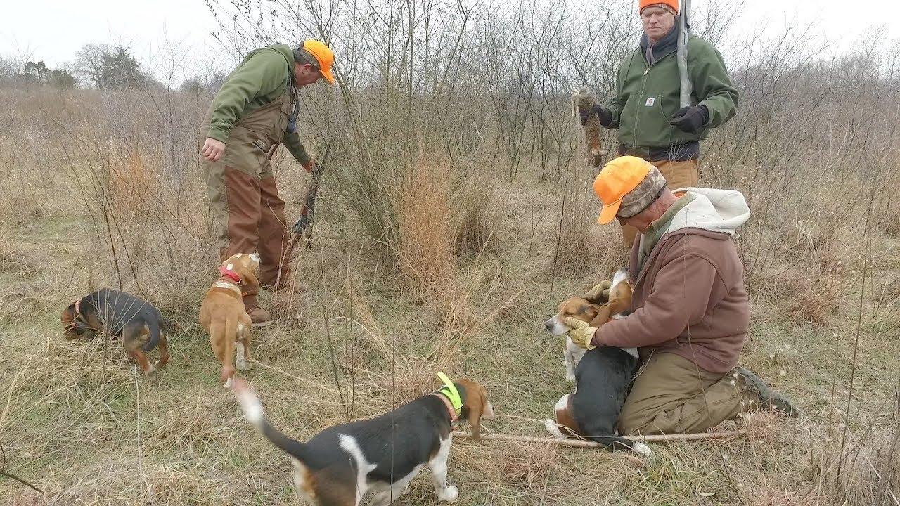Rabbit Hunting Dogs